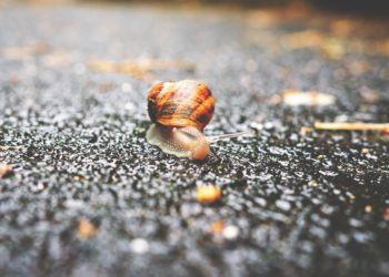 bave d'escargot bio - pranaloé
